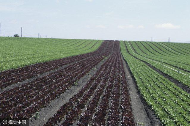 有機肥製作設備