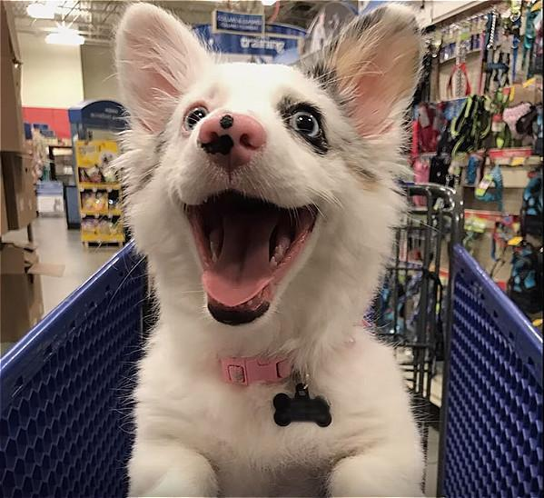 狗子第一次逛柠檬高兴的不得了,兴奋1的猴子可表情动搞笑图吃超市图片