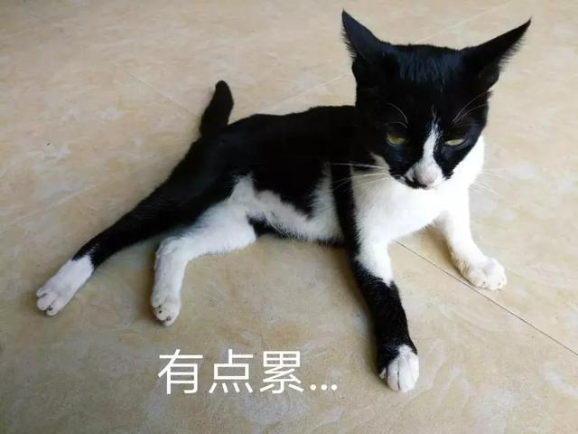 表情猫发神经各种尬帅,朕的奶牛动态图片表情包打屁股请收好~图片