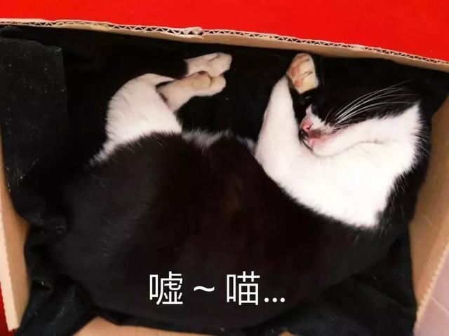 表情猫发神经各种尬帅,朕的奶牛晒死表情包了请收好~图片