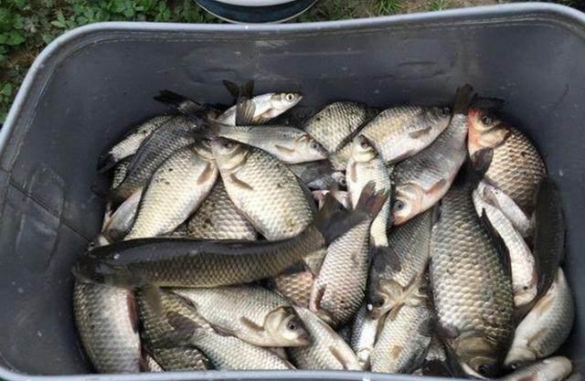钓鱼老手偷偷告诉我,这些十次钓鱼五次爆护的神奇窝料是他的绝招
