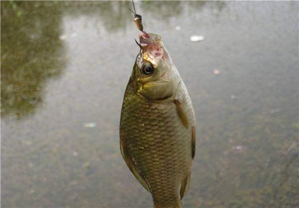 钓鱼的三个绝密技巧,大多数人都知其一不知其二,学会即称霸鱼塘
