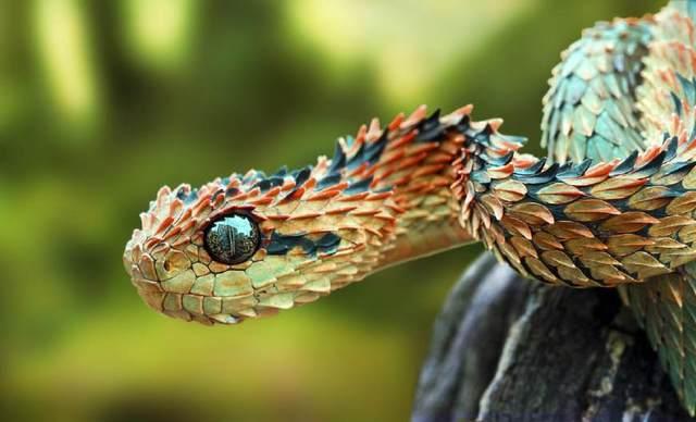 地球上最奇怪的22个稀有动物?