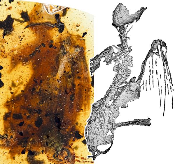 琥珀中发现最完整古鸟