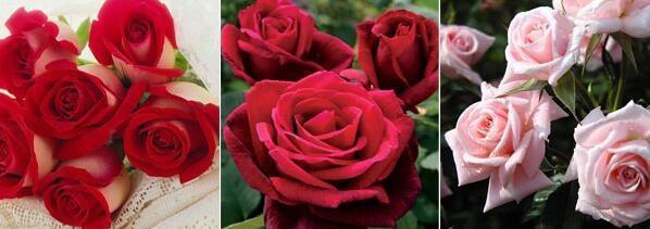 「情人节送干花可以吗」情人节买花