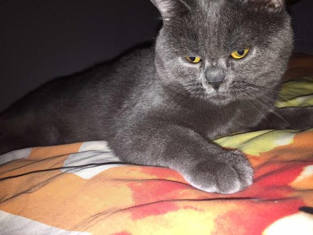 「招财猫」猫天使