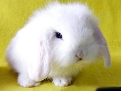「伽百利毛绒兔子」毛绒兔子